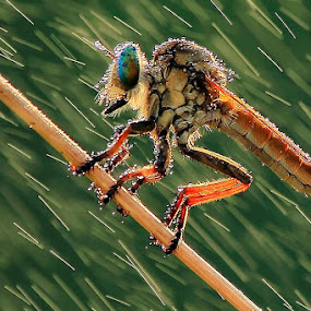 Hot Rainy by Fadel Satriawan - Animals Insects & Spiders