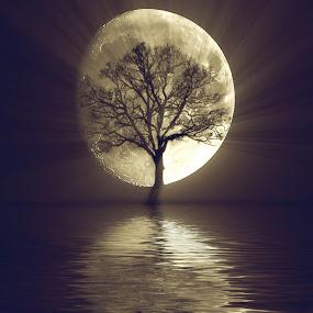 the tree by Fernando Ale - Digital Art Things ( moon ; tree ; refelection,  )