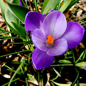 March 16th...spring is on the way by Karen Jaffer - Flowers Single Flower (  )