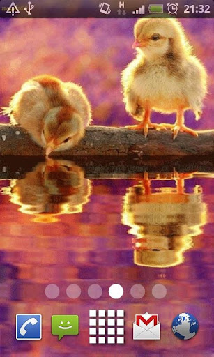 Cute Baby Chicks Live Wallpape
