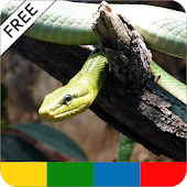 Reptile Care Guide - FREE