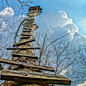 SycamoreTree Ladder by Stephanie Turner - Buildings & Architecture Other Exteriors ( ladder, blue sky, nature, tree, outdoor, architecture )
