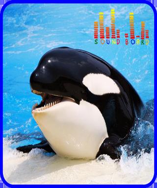 Whale Orca Soundboard
