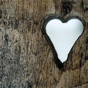 Woods heart by Adrian Mitu - Nature Up Close Other Natural Objects ( heart, wood )