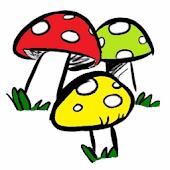 Guía de hongos y setas