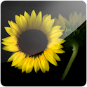 3D Sunflower I logo