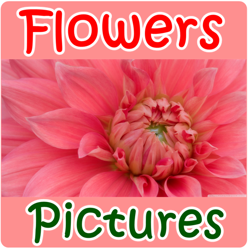 Flowers Pictures