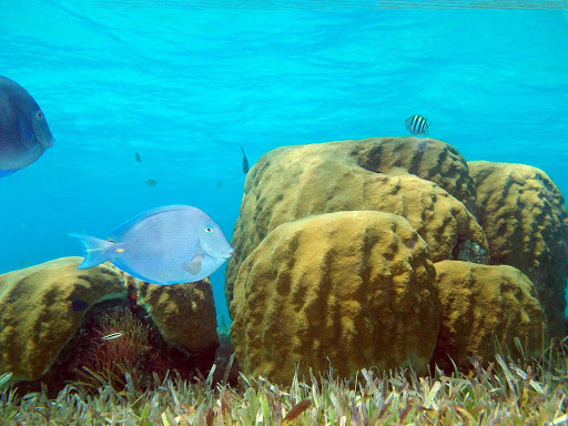 Snorkelers and scuba divers flock to Cozumel for the underwater views.