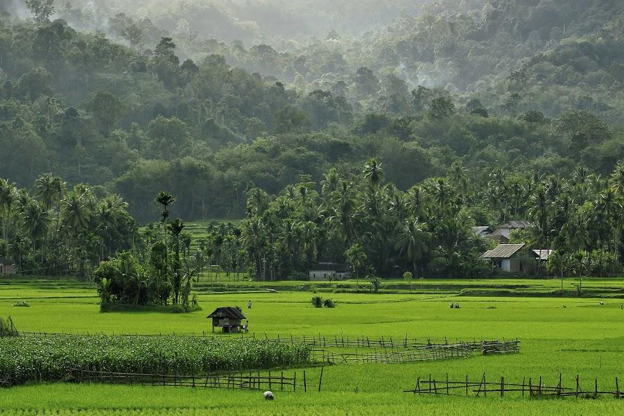 Alam yang Hijau by Muhammad Noli Hendra - Landscapes Mountains & Hills