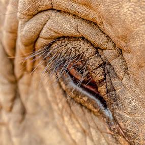 Elephant eye by Jen Thiele - Novices Only Wildlife