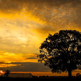 Norfolk Sunset by Dave Angood - Landscapes Sunsets & Sunrises ( colour, colourful, sky, tree, silhouette, sunset, landscape )