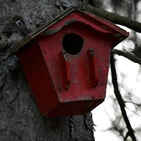 Birdhouse  by Bonnie Lea - Uncategorized All Uncategorized