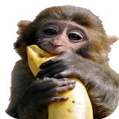 Banana Chimp