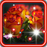 Rose Dew Drops live wallpaper