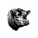 CowCalf icon