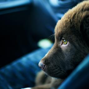 Cute puppy by Stoyan Katinov - Animals - Dogs Portraits ( canon, stoyan katinov, canon6d, dogs, puppie, katinov, cute puppy, pet, pets, puppy, dog, cute dog, animal, eye )