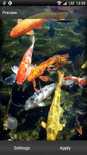 Koi Fish Live Wallpaper - screenshot thumbnail