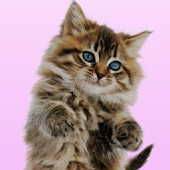Dancing Purring Cat Live Wallp