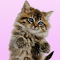 Talking Cat. Dances and Purrs. 1.2.0 Apk
