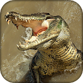 Wildlife Angry Crocodile