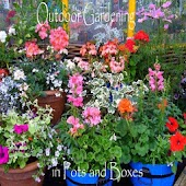Outdoor Gardening in Pots