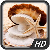 Beautiful Shell HD Wallpapers