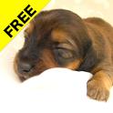 Puppy calendar Free icon