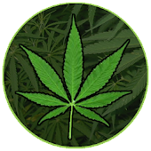 Enciclopedia de la Marihuana
