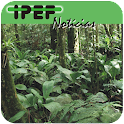 IPEF Notícias icon