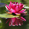 C:\Users\Jim\Pictures\0Pixoto\BYWaterLily2.jpg