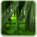 RealDepth Forest LWP icon