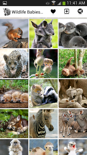 Wildlife Babies Wallpaper