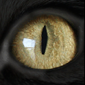 Feline eye Live Wallpaper icon
