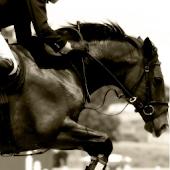 Agility Horse SEF Italia