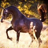 Cool Arabian Horse Game