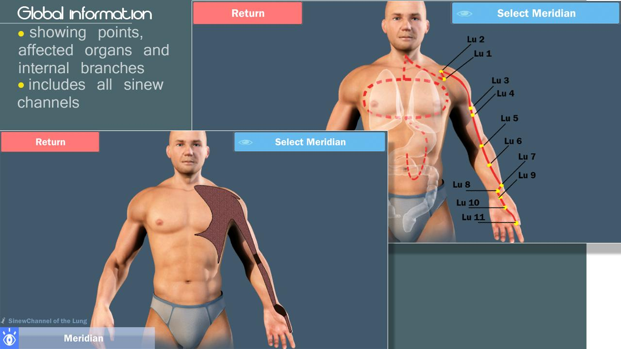 Easy Acupuncture 3D-MED - screenshot