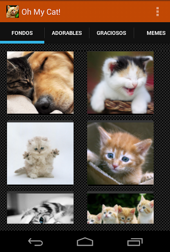 Gatos Fondos y fotos graciosas