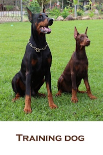 Training dog - screenshot thumbnail