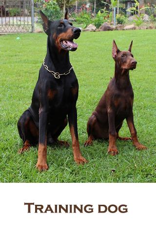 Training dog - screenshot