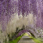 Most beautiful gardens