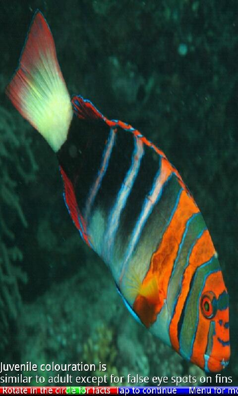 Marine Aquarium Fish- screenshot