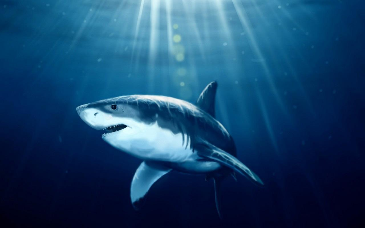 3D Sharks Live Wallpaper