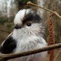 Long-tailed Tit/ Schwanzmeise