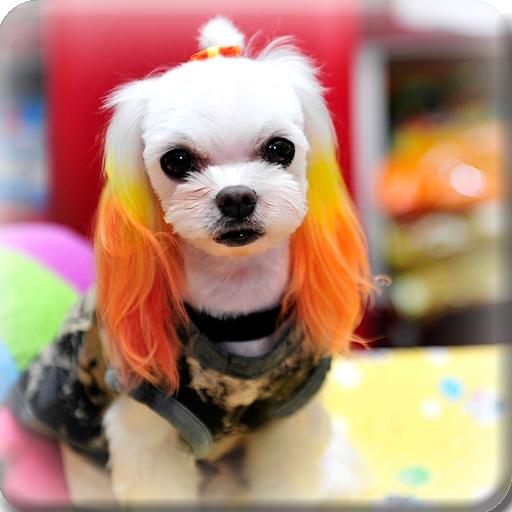 e-편한도그(하대원동애견샵,강아지미용,강아지분양,교배)