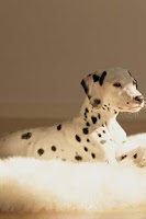 Screenshot of Dalmatian Puzzle