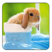 Magic Ripple:3D Rabbit LWP