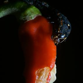 Hot Caterpillar by Sudarmanto Edris - Animals Other