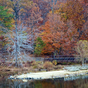 Lake Accotink by Jim Ackermann - Landscapes Forests ( tree, fall, trail, lake, lake accotink park )