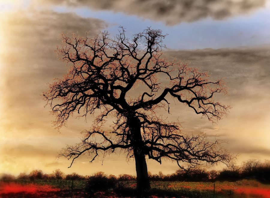 Red Tree Glow by Scott Walker - Digital Art Things ( clouds, nature, tree, color, sunsets, trees, glow )