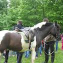 bosnian ponny/ bosanski brdski konj